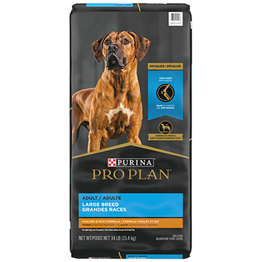 Focus Adult Large Breed Formula