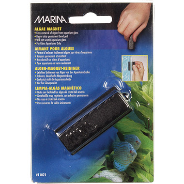 algae-magnet