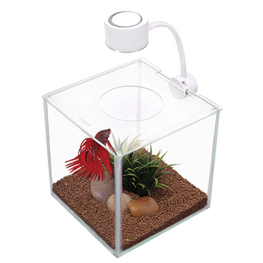 CUBUS Glass Betta Kit