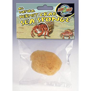 Hermit Crab Sponge