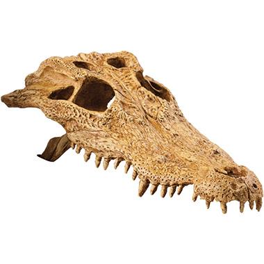 crocodile-skull