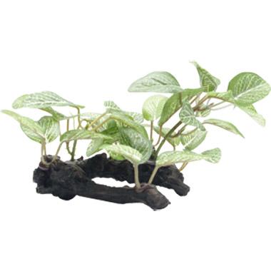 african-shade-leaf