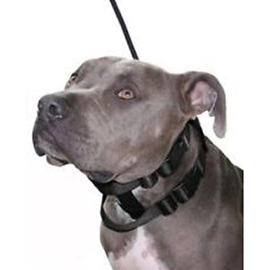 illusion-collar-leash-set-black
