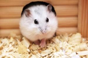 Habitat-Sweet-Habitat-Hamsters