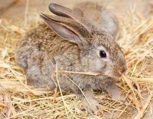 Habitat-Sweet-Habitat-Rabbits