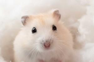 Hamster-101