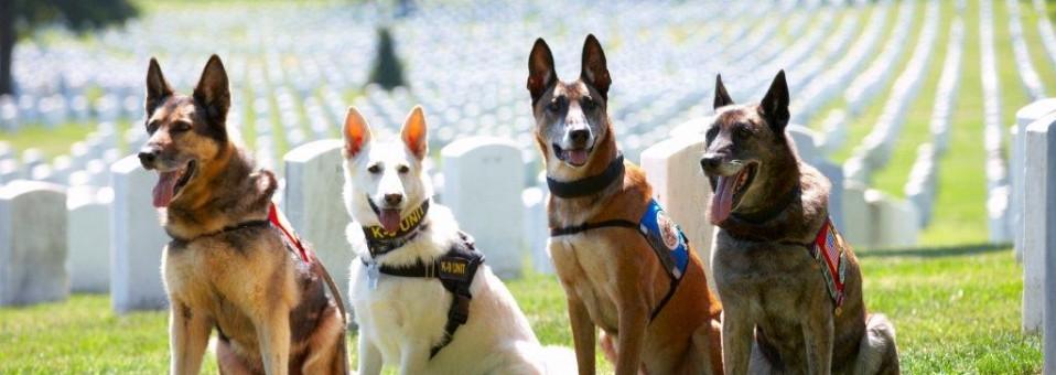 4 War Dogs