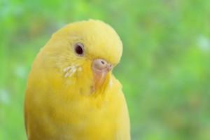 Canary-101