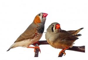 Habitat-Sweet-Habitat--Finches