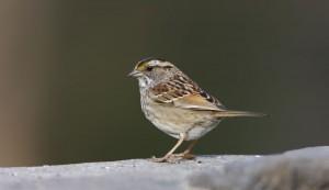 wildbird1