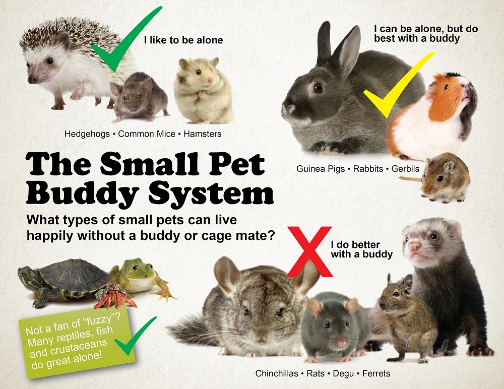 small pet buddy system02