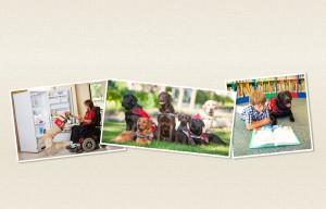 14-2489 - Dog Guides Bl#232