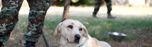 Vet Dog Blog Header