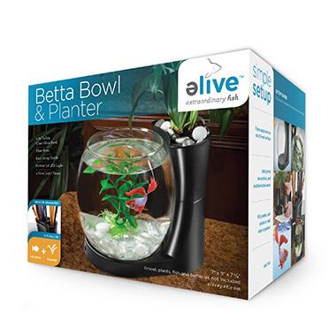 Betta Bowl & Planter Black
