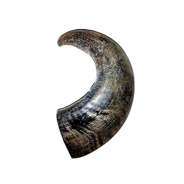 water-buffalo-bully-horn