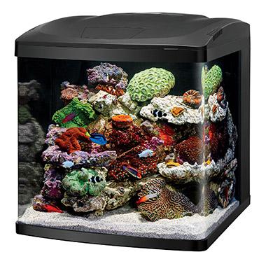 LED Bio Cube