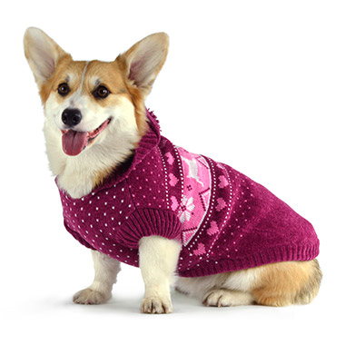 Image result for corgi dog in clothes