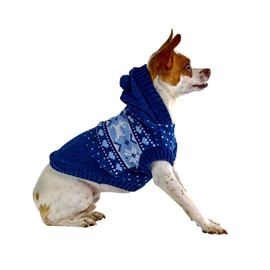 Apparel Dog