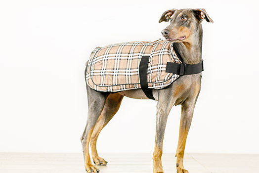Bailey & Bella Plaid Blanket Coat