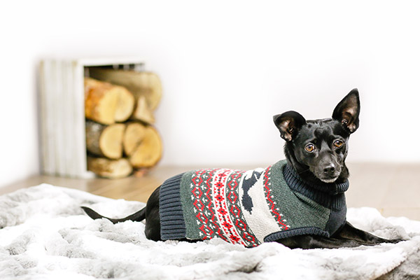 Bailey & Bella Beavers Sweater