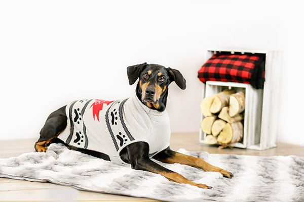 Bailey & Bella Maple Leaf Sweater