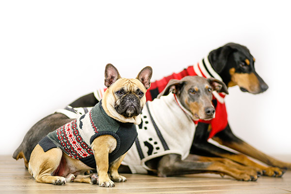 Bailey & Bella Assorted Sweaters