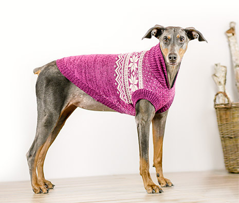 Bailey & Bella Nordic Sweater