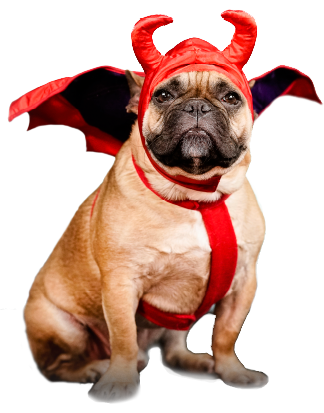 Marcelle the Dog in Devil Costume