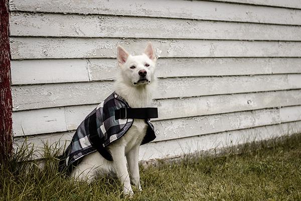 Bailey & Bella Blanket Coat Black