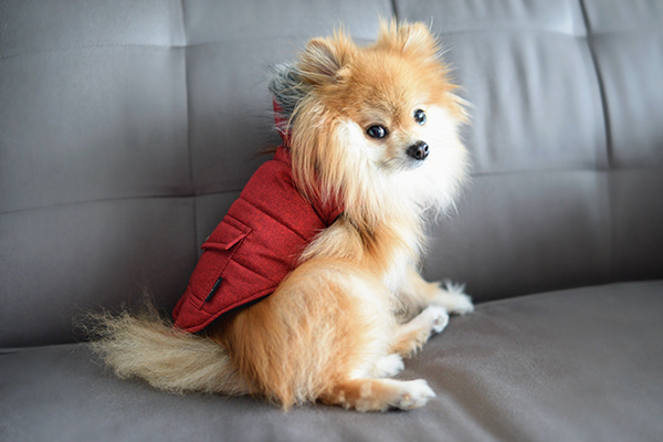Bailey & Bella Puffer Parka Red