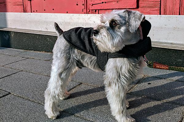 Bailey & Bella Tweed Blanket Coat