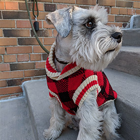 Bailey & Bella Buffalo Check Sweater