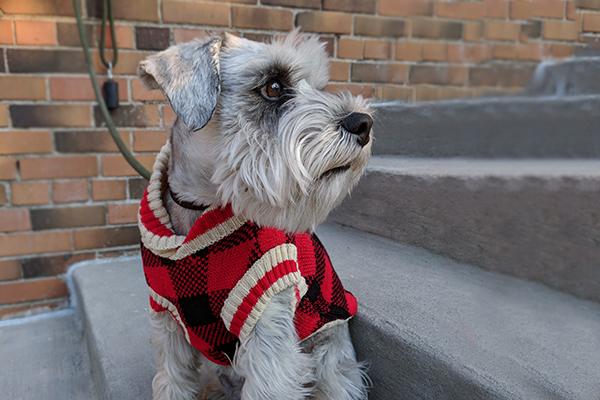 Bailey and Bella Buffalo-Check Sweater