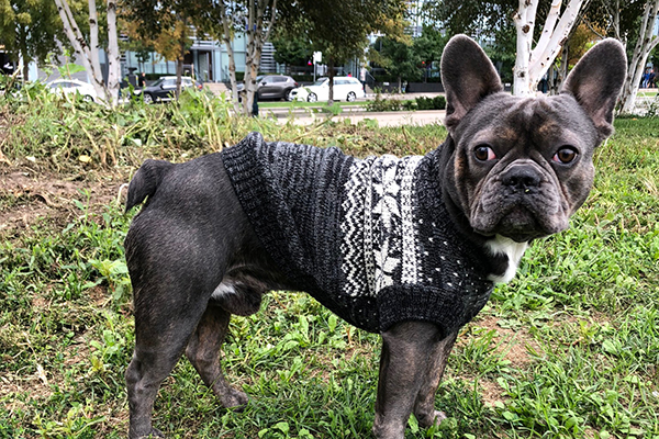 Bailey and Bella Nordic Sweater Grey