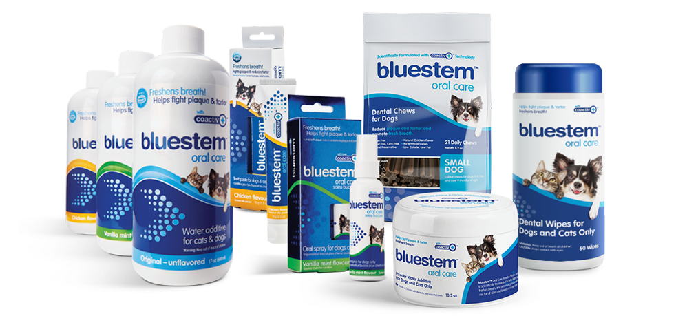bluestem dental products