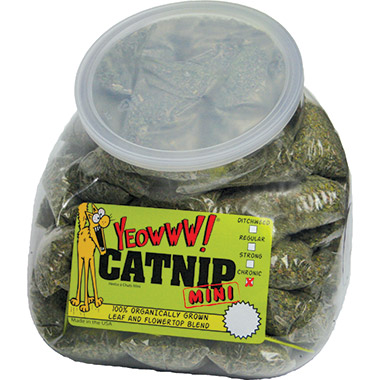 Catnip Mini