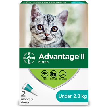 II for Kittens