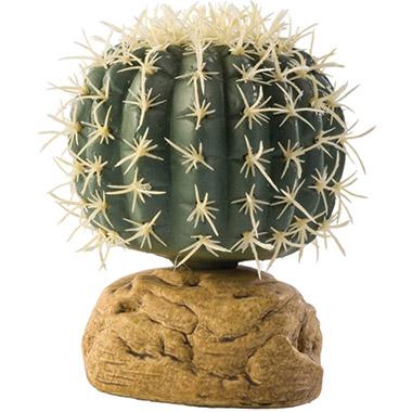 Desert Plant Barrel Cactus