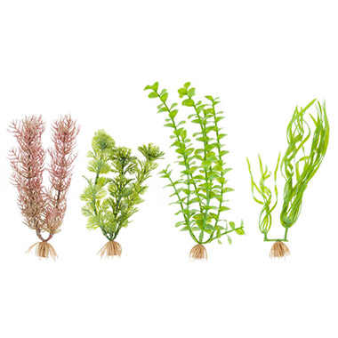 Foxtail, Cabomba, Corkscrew Val and Green Bacopa Combo Pack Artificial Plants