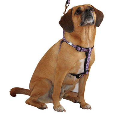 Adjustable Nylon Step-In Dog Harness - Nirvana