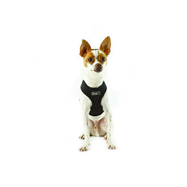 Air Mesh Harness Black
