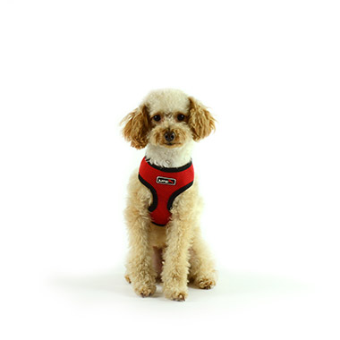 Air Mesh Harness Red