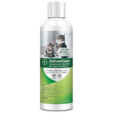 Flea and Tick Shampoo Treatment for Cats and Kitten