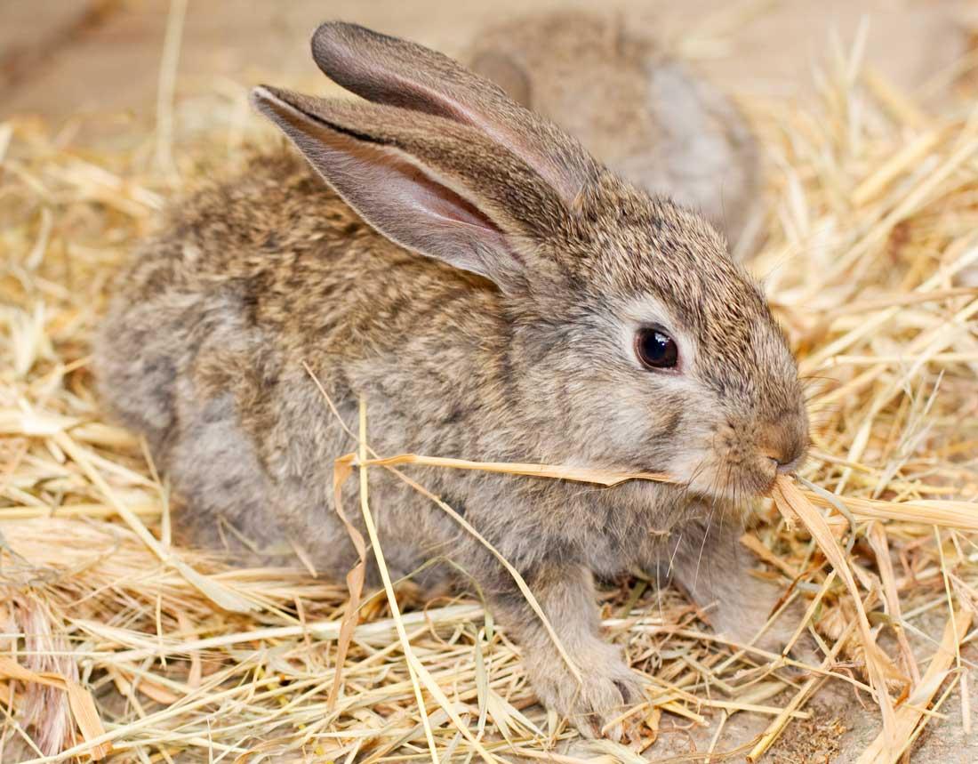 Habitat Sweet Habitat: Rabbits