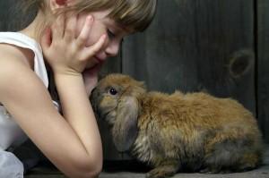 Rabbit-101