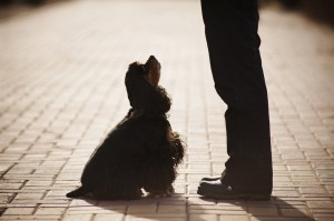 silhouette of dog sitting for owner