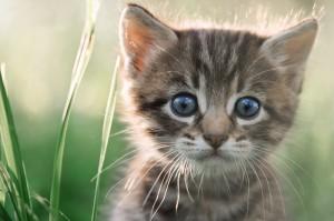 kitten sitting in grass