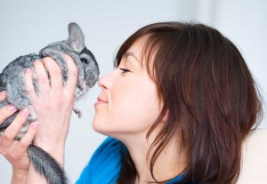 Chinchilla with woman