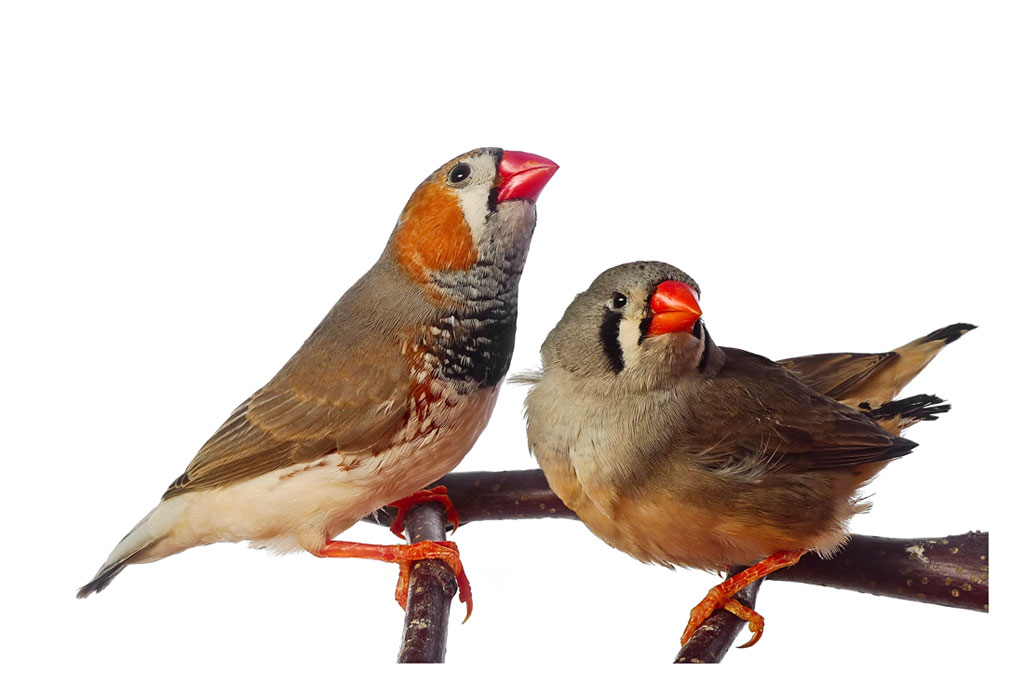 Habitat Sweet Habitat: Finches