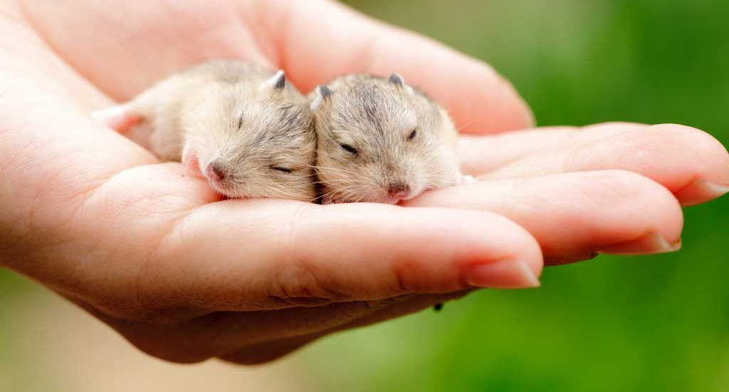 Smallest Animals For Pets